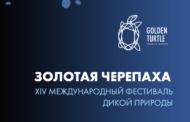 Крупнейший фестиваль дикой природы «Золотая черепаха» пройдёт на ВДНХ онлайн