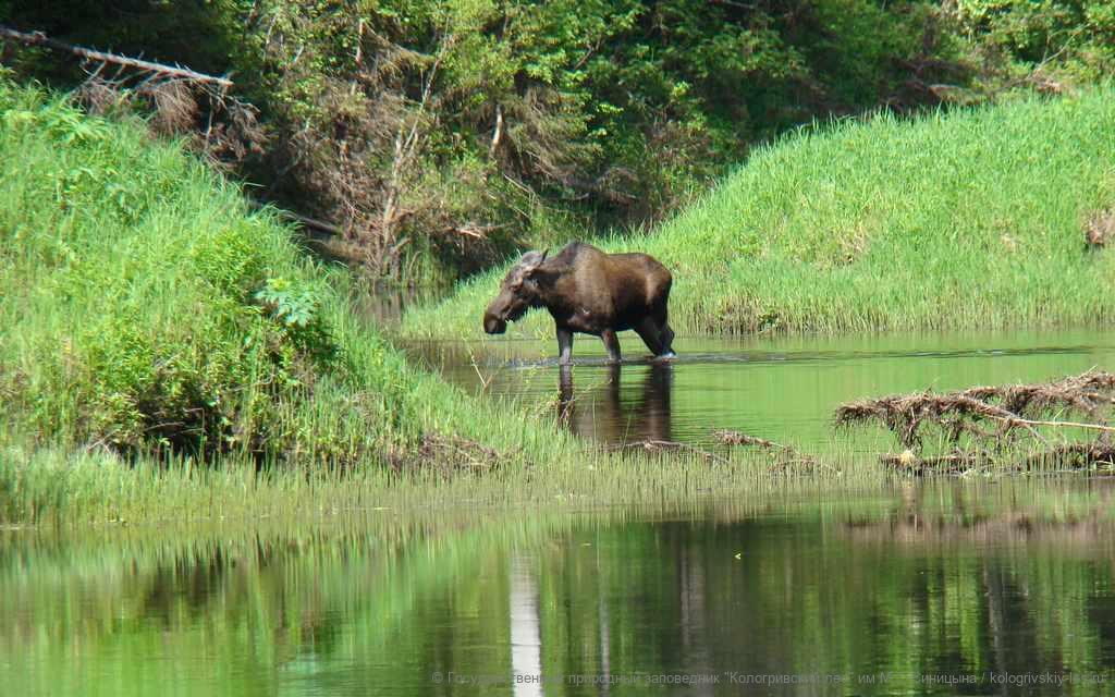 Заповедник «Кологривский лес» внесен в список биосферных резерватов ЮНЕСКО
